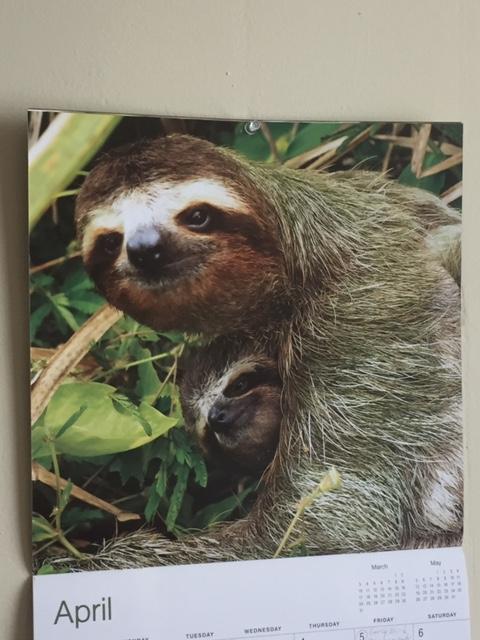 Sloth April calendar